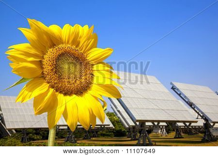 Beautiful sunflower and solar panel and power plant.