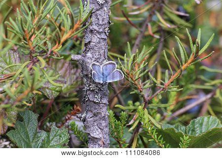 Marsh Moth On A Stick