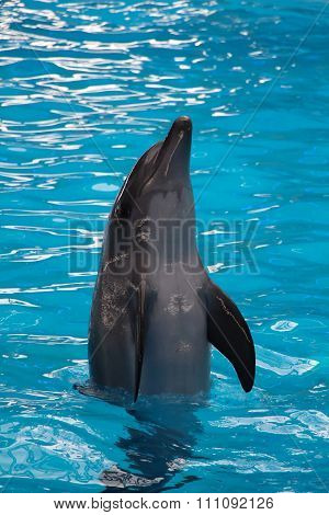 Dolphin Jumping Up
