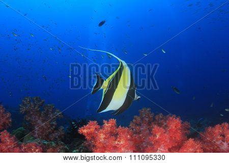 Underwater coral reef and fish: Moorish Idol