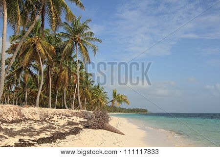 Tropical Beach In Dominican Republic