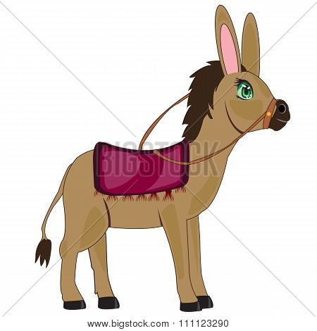 Vector illustration pets burro on white background is insulated