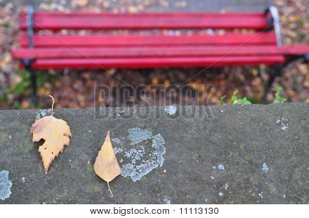 Lonely bench and paired leaves