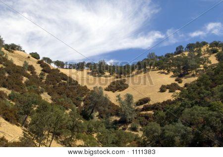 California Hillside At Lake Berryessa Pct2699