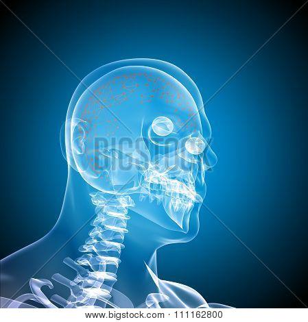 Side face skull x-ray image