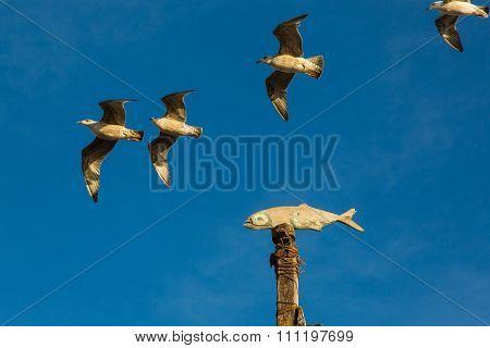 Gulls In The Sky