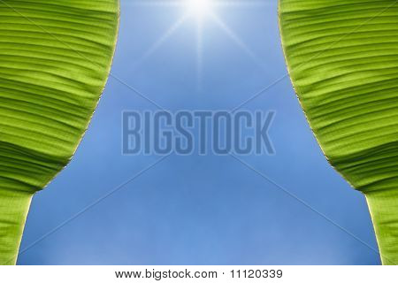 Open the banana foliage curtain to see blue sky poster