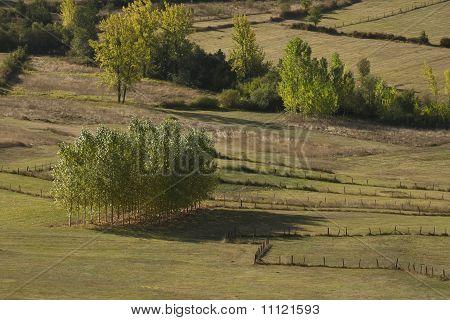 Trees At  The Prairie