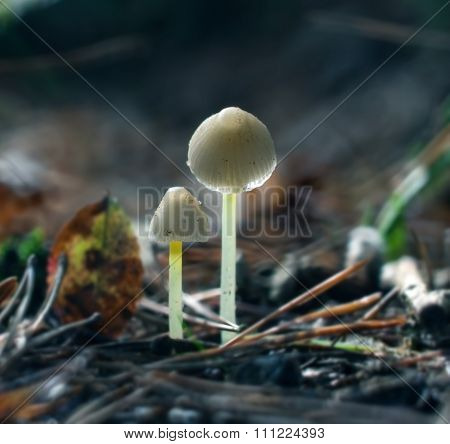 Small Toadstools
