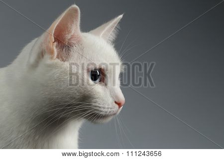 Closeup White Cat With  Blue Eye In Profile On Gray