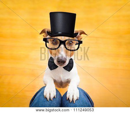 Dog Begging On Lap