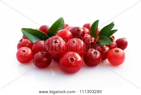 Fresh Cranberries With Leaves