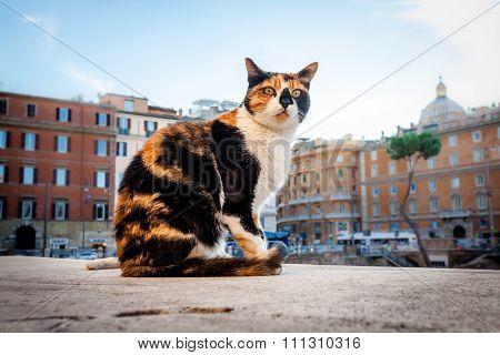Cat lives near Largo di Torre Argentina, Rome, Italy