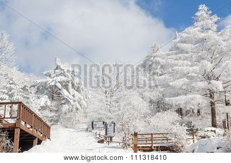 Winter White Snow  Of Sobaeksan Mountain In Korea.