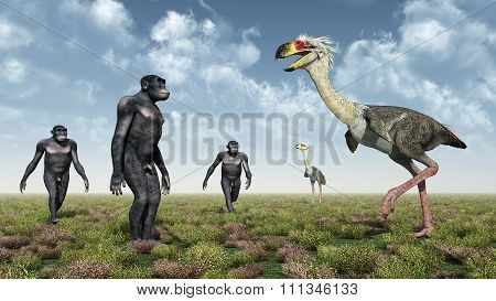 Homo Habilis and the terror bird Phorusrhacos