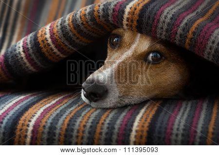 Dog Ill Or Sleeping