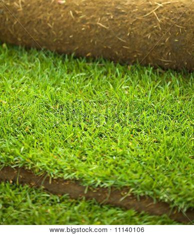 Turf Grass Roll Closeup