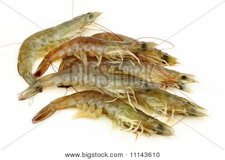 Shrimp on white background.