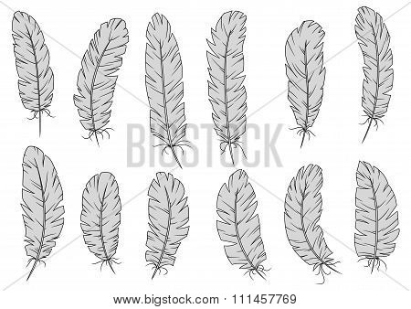 Light gray isolated fluffy bird feathers