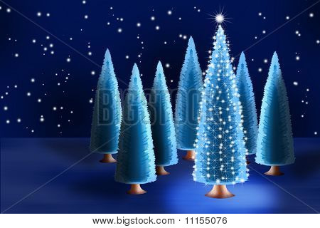 Christmas Tree In Forest