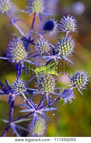 The green grasshopper