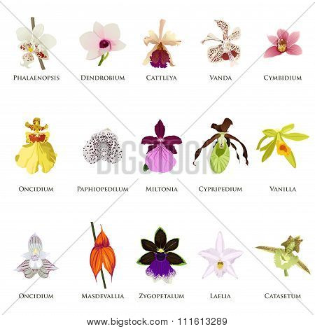 Orchid Icons