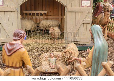 Live Sheep in Nativity