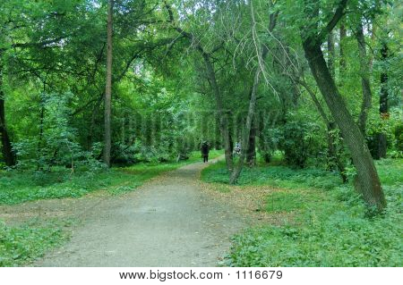 walking in a forest for good health and pleaser poster