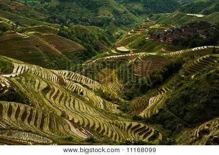 Steep Rice Terrace Mountain Titian Longji Overcast