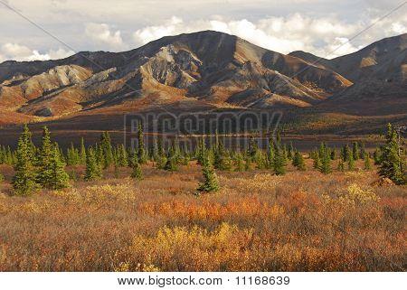 Taiga And Tundra