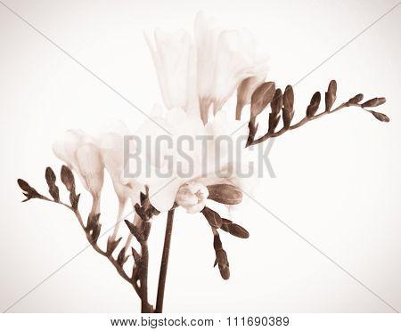 Beautiful spring flowers. Retro effect