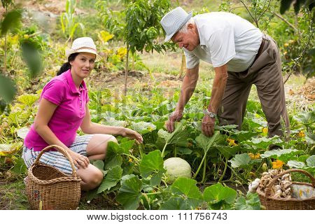 Younger woman and older man working in the garden