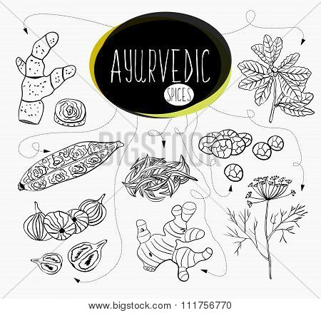 Hand-sketched Collection Of Elements Of Ayurvedic Spices In Our Kitchen.  Herbs And Supplements Ayur