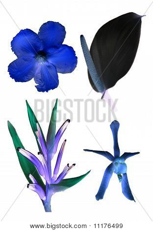 Inverted Floras
