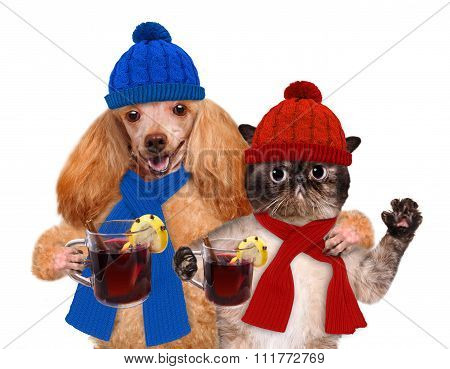 Dog with a cat, holding in the paws of mulled wine.