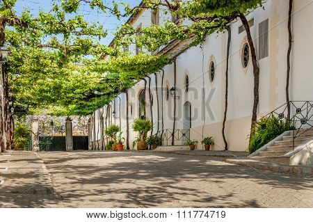 Lane with vines at Tio Pepe buildings