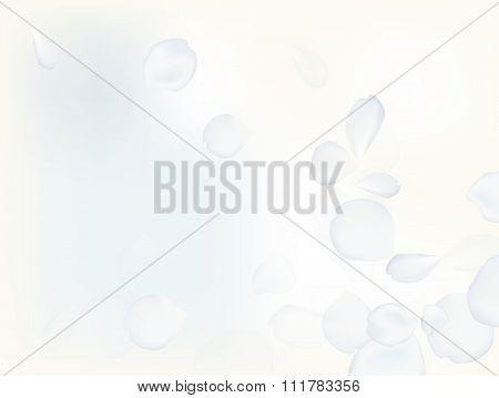 White Petal Rose Soft Background