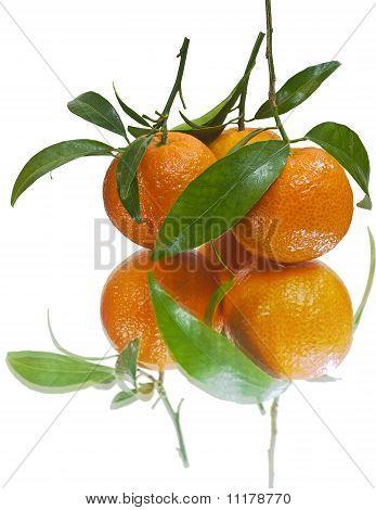 Juicy tangerines (isolated)