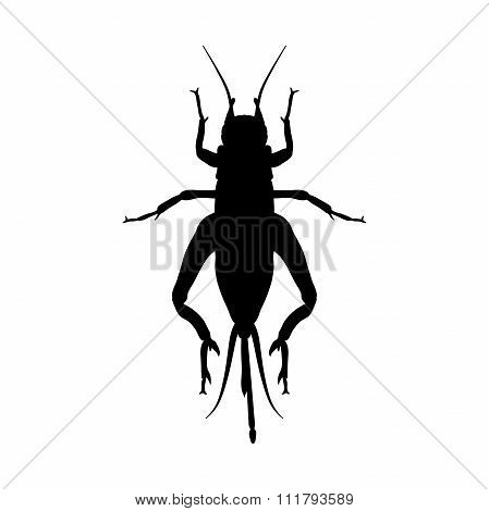 cricket. grig. Gryllus campestris. Sketch of cricket.  cricket isolated on white background.