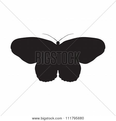 Butterfly Idea Leuconoe. Paper Kite . Sketch of Butterfly. Butterfly isolated on white background