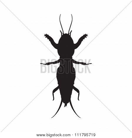 Gryllotalpidae silhouette.European mole cricket. gryllotalpa. Sketch of mole cricket  mole cricket i