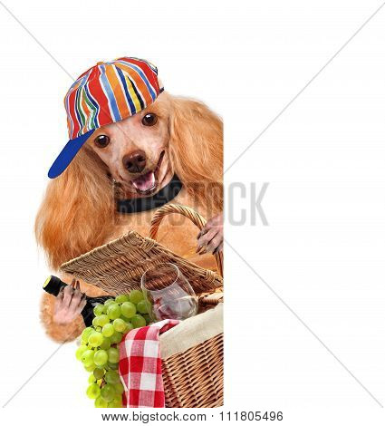 Dog with picnic basket.