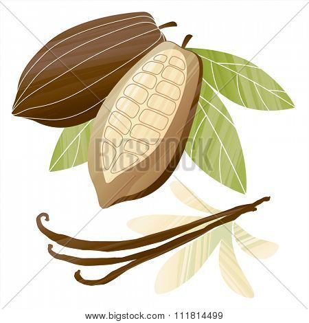 Vector illustration with painted cacao beans and vanilla pods