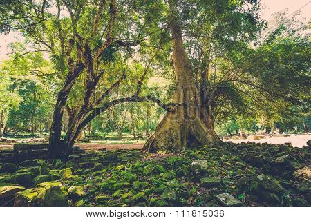 Old banyan tree roots in Angkor temple ruins, Siem Reap, Cambodia.