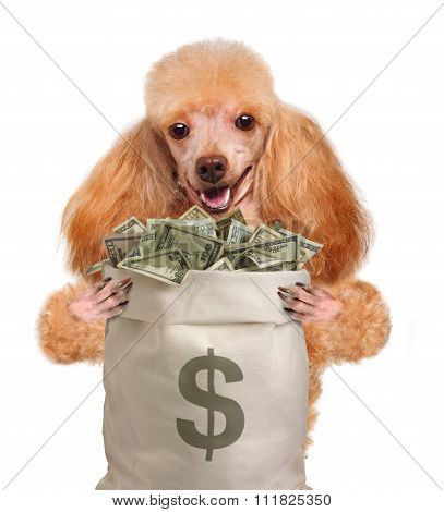 Money dog holding.