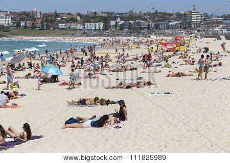 People swimming and sun bathing at Bondi Beach