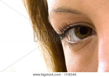 a close-up macro shot of an eye.