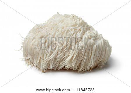 Single Lion's mane mushroom on white background
