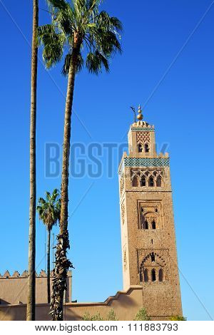 History In Maroc Africa  Palm