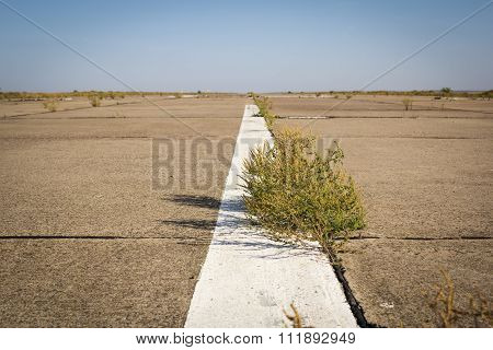 Abandoned overgrown road in the desert tumbleweed